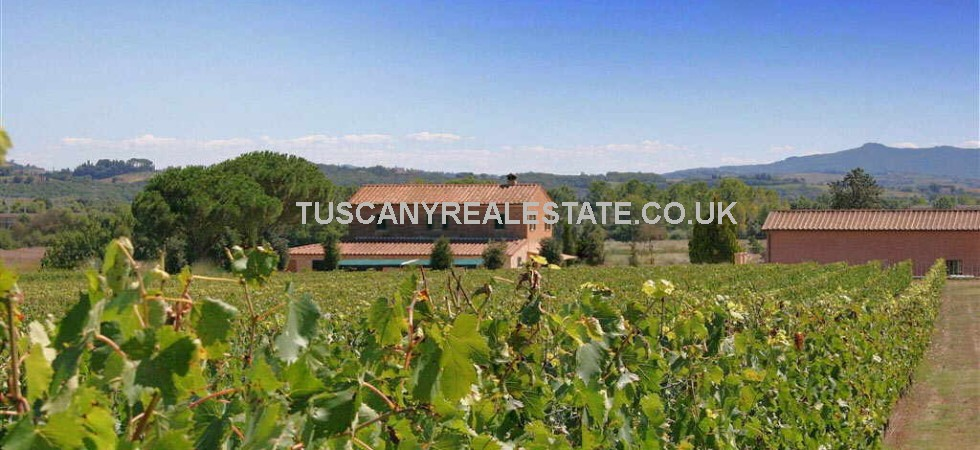Montepulciano Vineyard Property