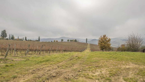 Chianti Classico Vineyard and Agriturismo