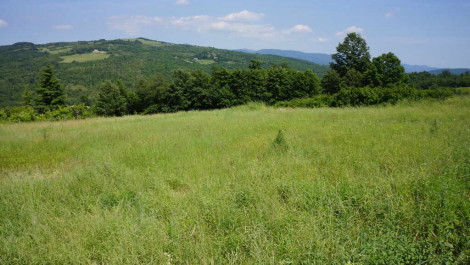 Buy Land In Tuscany