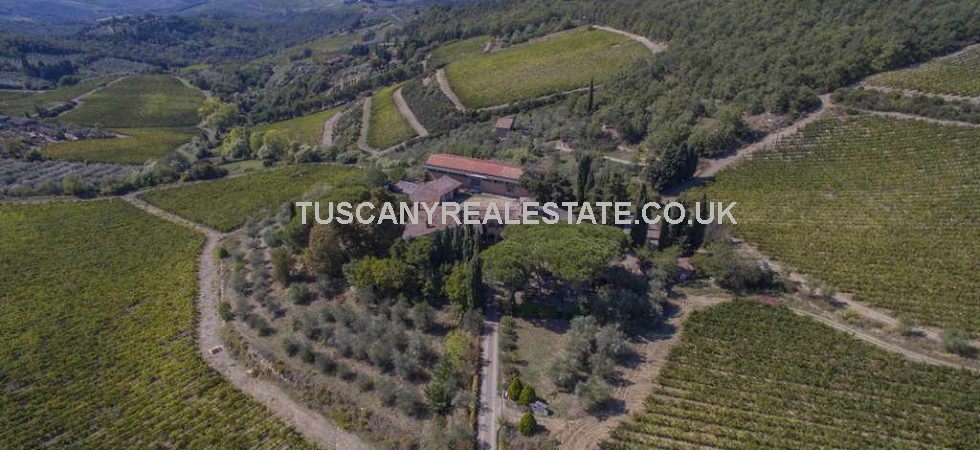 Agriturismo and organic wine business