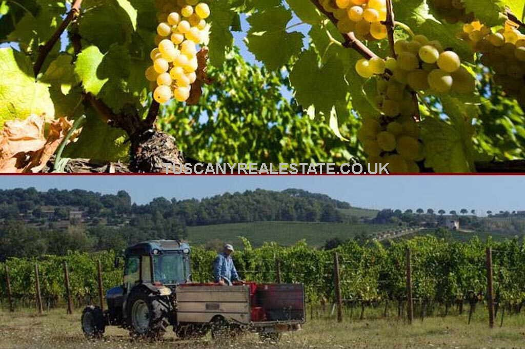 Working Vineyard For Sale