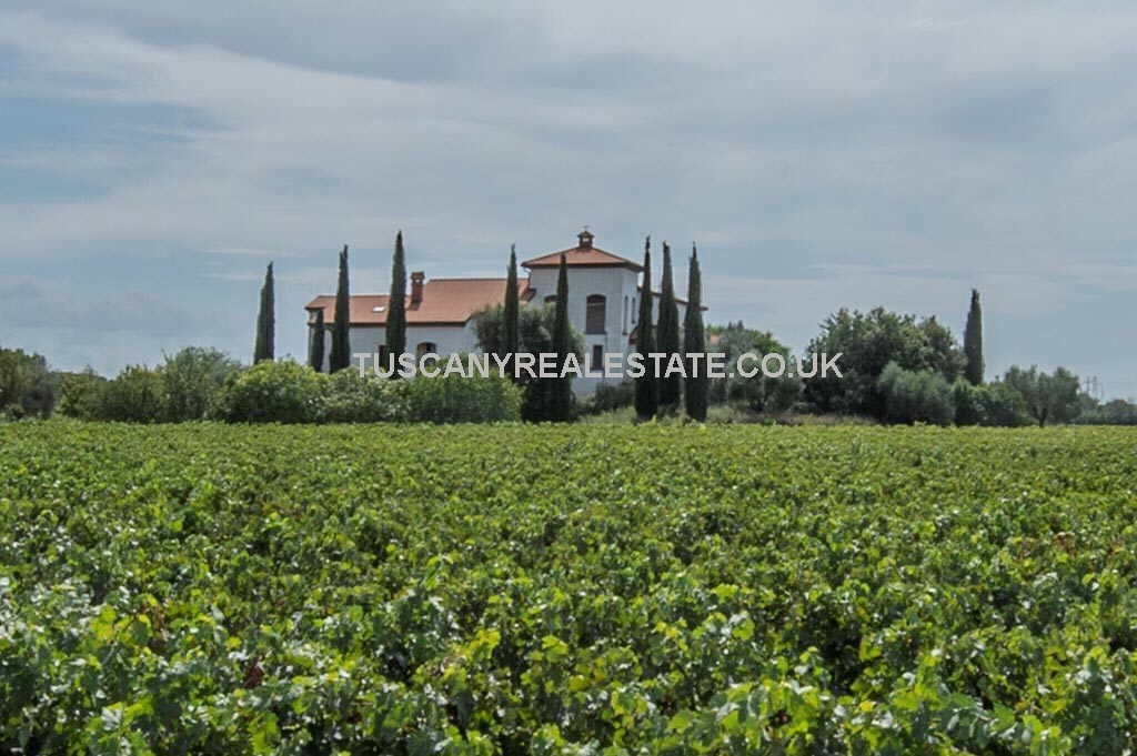Commercial vineyard property in Tuscany