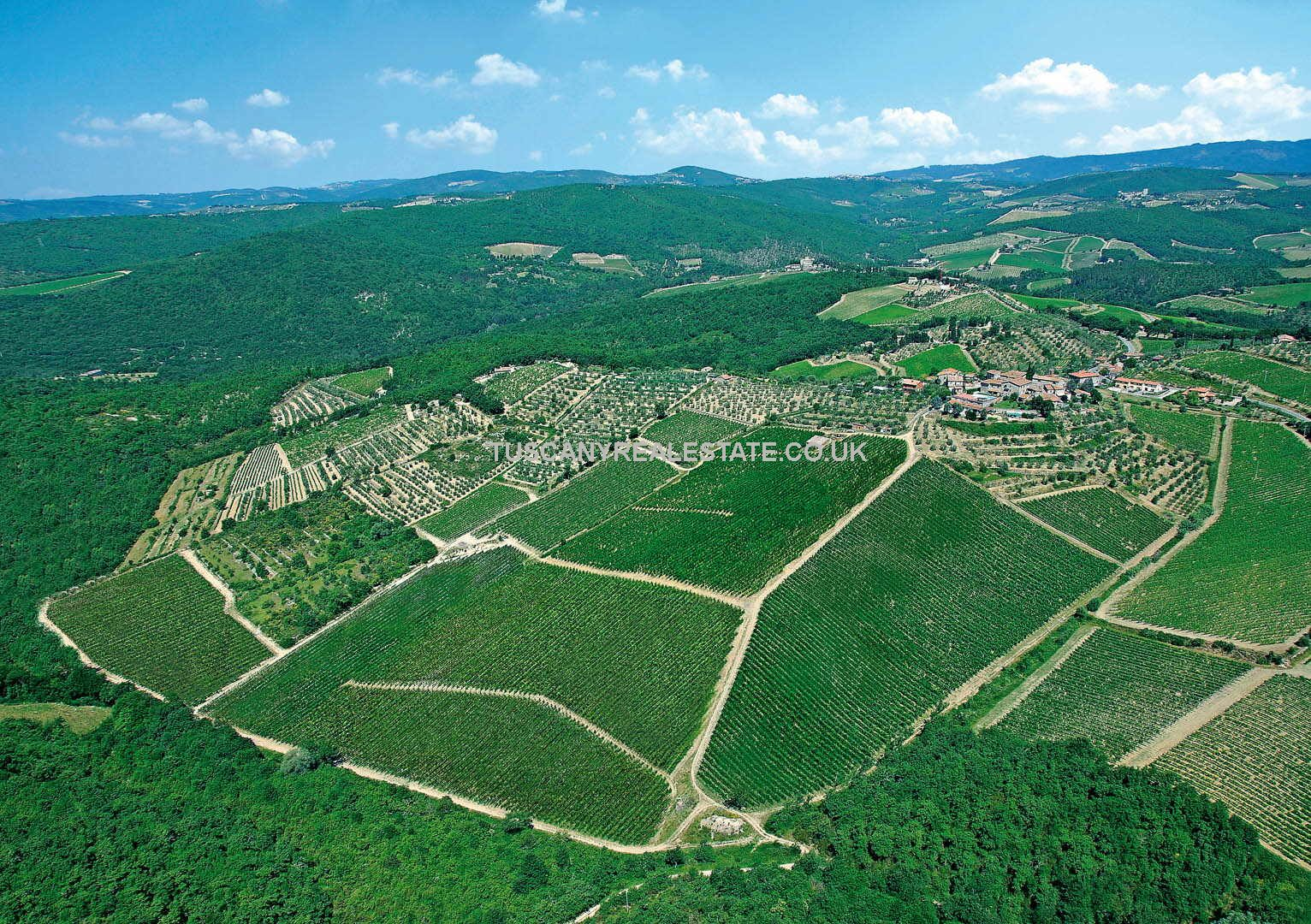 Vineyard in Italy – Chianti Classico Winery
