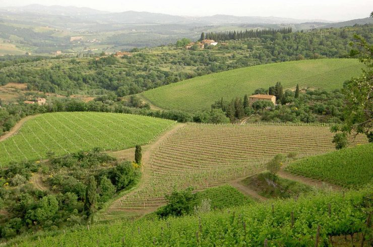Chianti vineyard property