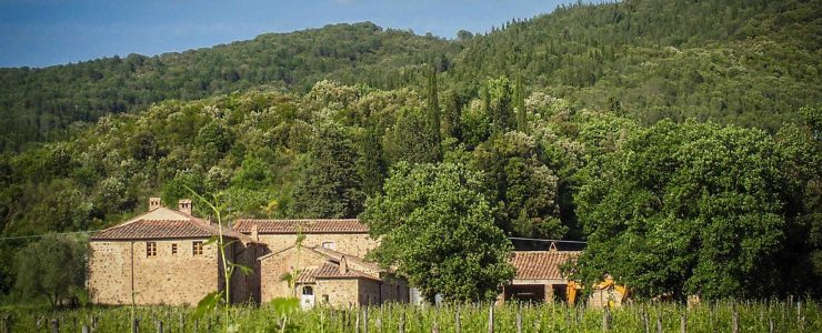 Montalcino vineyard estate with further potential