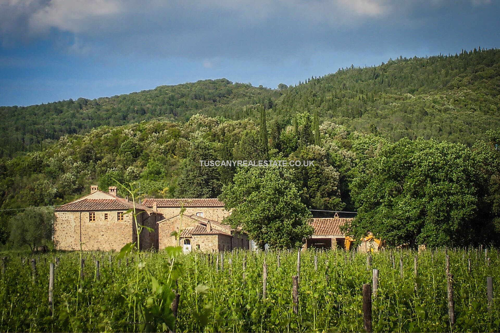 Montalcino Tuscany vineyard for sale