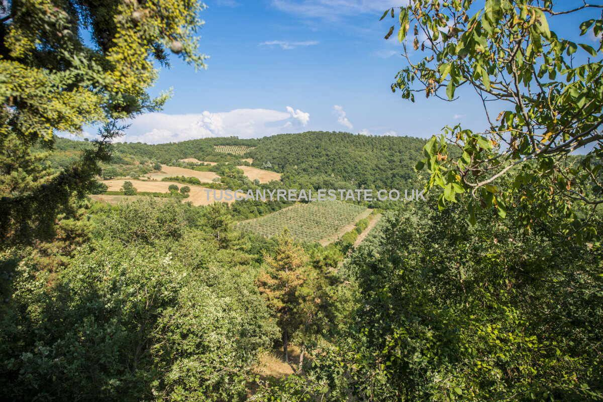 Farm with olive grove and vineyard